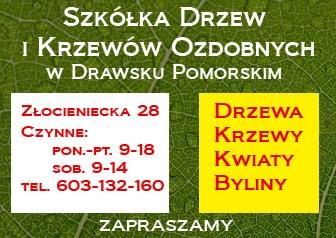 Szkółka Wyrzykowski