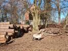 2021-03-08 Wilki zagryzły owce w Żelisławiu. Wdarły się do stajni (2)