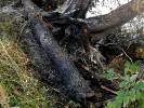Wypalili drzewa nad jeziorem Lubie
