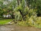 Uwaga na wiatr – przewracają się drzewa. Właśnie przewróciły się drzewa w drawskim parku