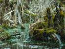 Potwory z bagien. Dlaczego są takie ważne