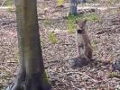 Bliskie spotkanie z rysiem w naszych lasach
