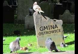 Bankructwo Ostrowic: Rozprawa sądowa znów odroczona
