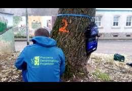 Skanują drzewa w Drawsku. Będą wiedzieć co się dzieje z drzewami