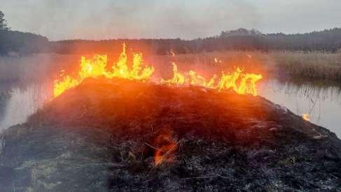 Zaczyna się wypalanie. Strażacy gaszą głupotę. Zdjęcia