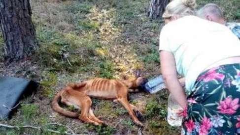 Porzucony pies konał w lesie. To niewiarygodne jak można potraktować zwierzę