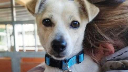 Szukamy domu dla psiaka, który prawdopodobnie został wyrzucony z auta