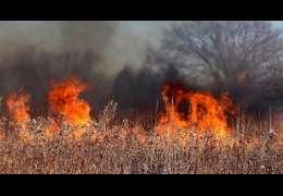 Stop wypalaniu traw. Leśnicy i strażacy z apelem