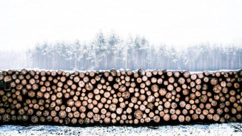 Powiat planuje rozwój lokalnego przemysłu drzewnego