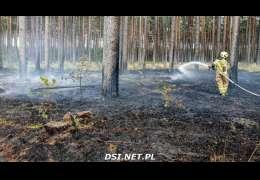 Uważajcie: Sucho w lasach. Właśnie spalił się fragment  lasu okolicach m. Psie Głowy