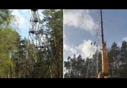 Gigantyczna wieża powstała w naszych lasach