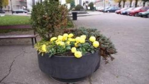 Zobacz co Czaplinek zrobił z odkupionymi kwiatami na cmentarze
