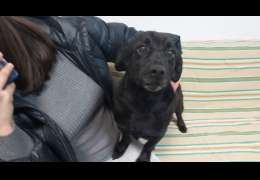 Gmina Złocieniec: Te psy zabrali właścicielowi prosto z podwórka. Teraz szukają dla nich domu